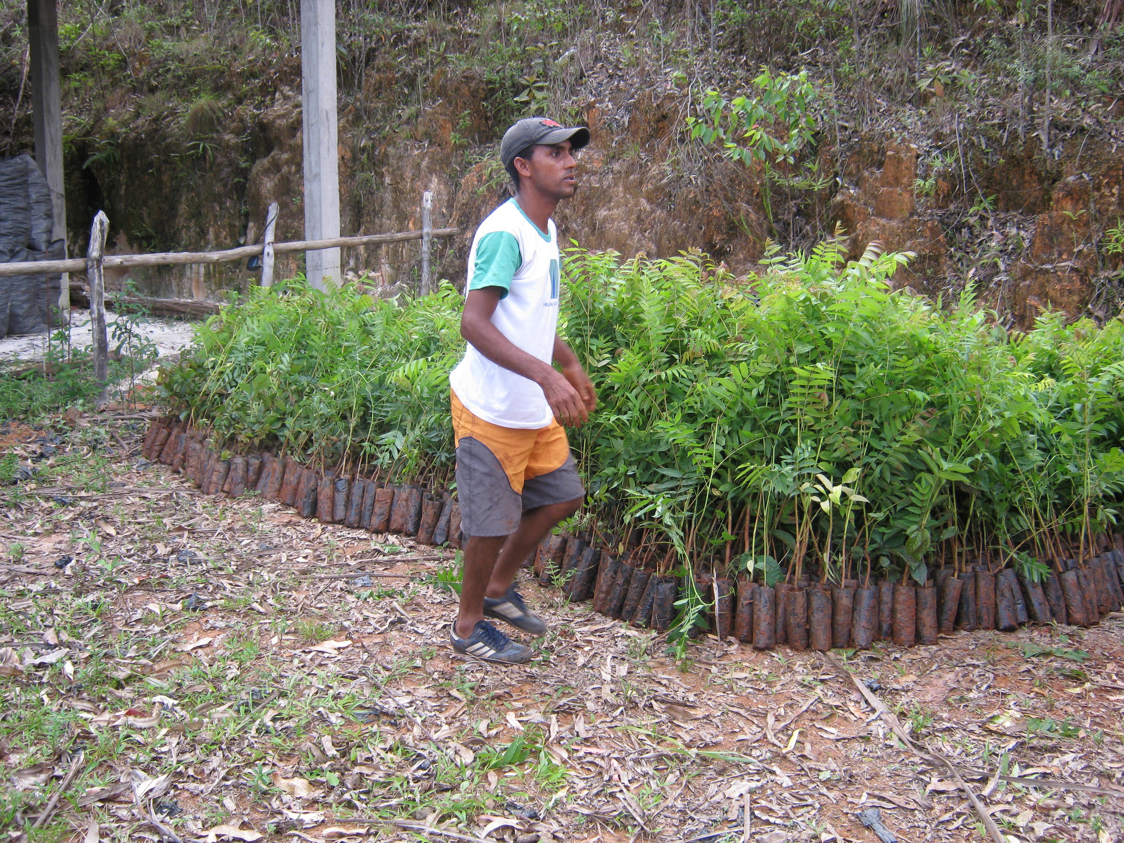 Entrega de mudas para reflorestamento. Foto: Amalapinha